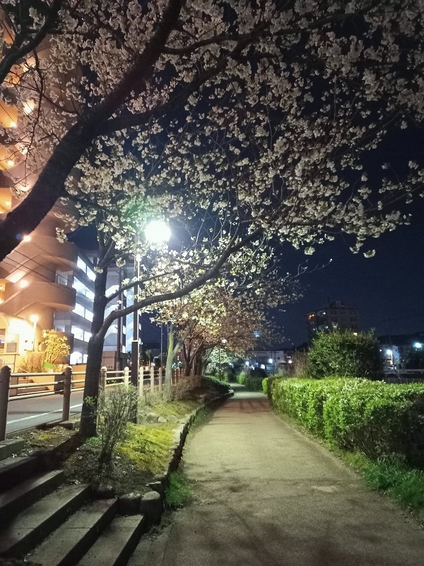 ドラッグストアに向かう道中。桜が咲いてました