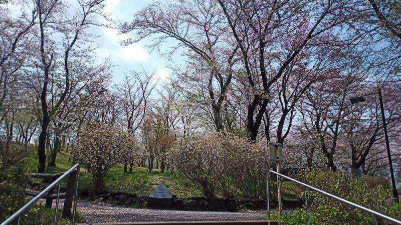 近所の公園。人が多いなと思ったら春休みだからですね。