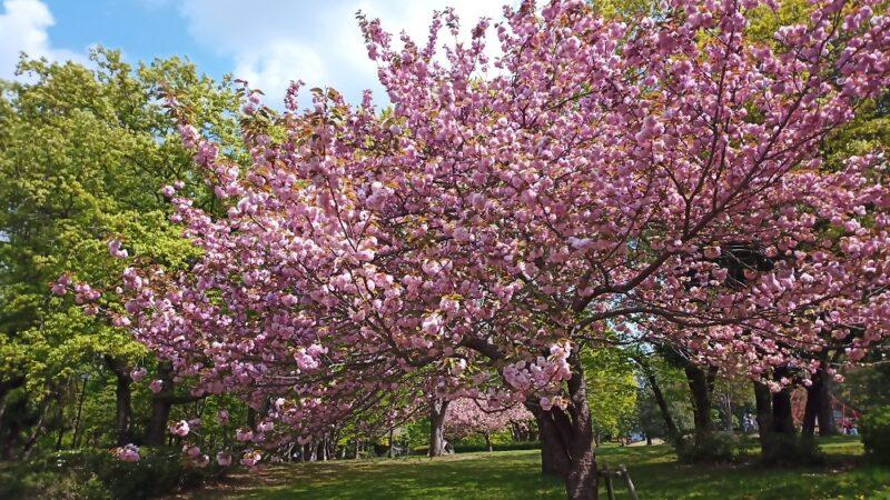近所の公園で撮影した花