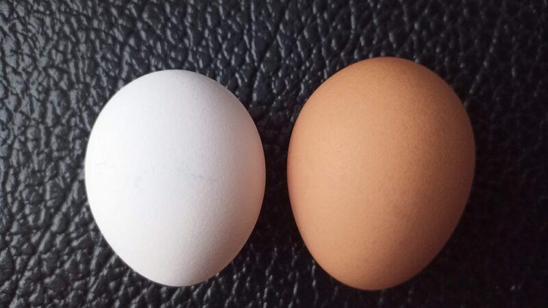 左がいつも買ってる149円の玉子(MS)。右が今回買った192円の玉子(MS~LL)。